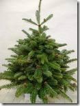 kerstboom 8